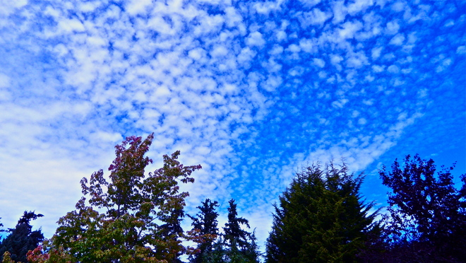 Lambs tails across the sky Victoria, British Columbia Canada