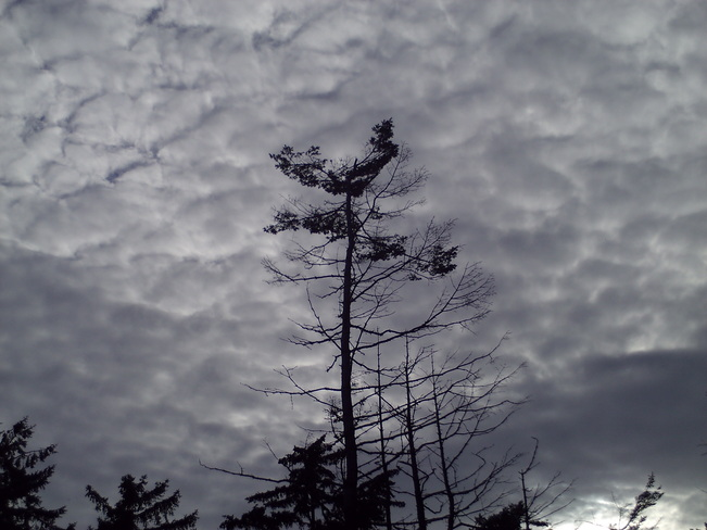 Clouds and trees. Courtenay, British Columbia Canada