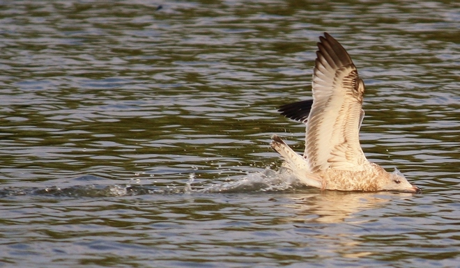 BODY SURFING Scarborough, Ontario Canada