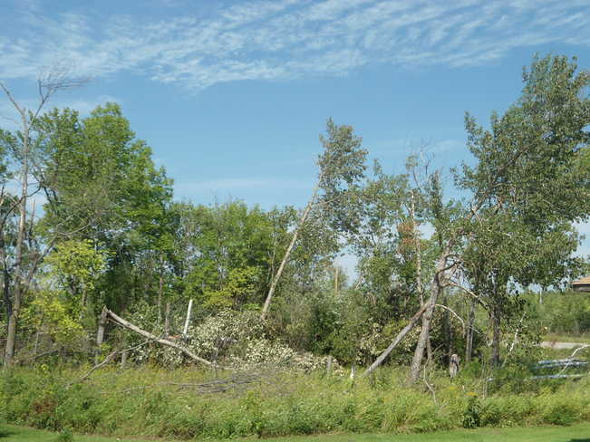Trees Devastated By Winds Fort Alexander 3, Manitoba Canada