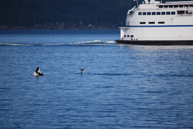 Orcas and BC Ferry Salt Spring Island, British Columbia Canada