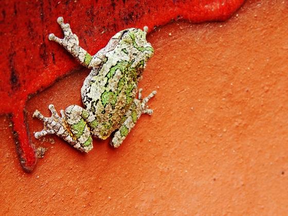 5b. Frog Climb