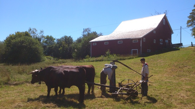 Ox Time at New Ross Farm New Ross, Nova Scotia Canada