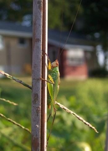 Cricket West Lorne, Ontario Canada