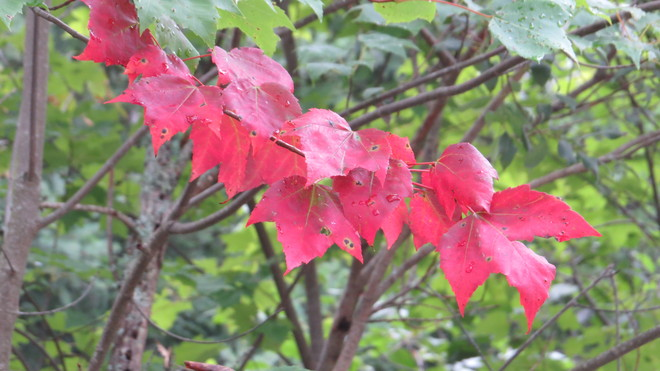 fall is in the air Rutherglen, Ontario Canada