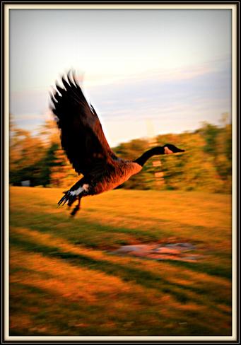 In Flight Greater Sudbury, Ontario Canada