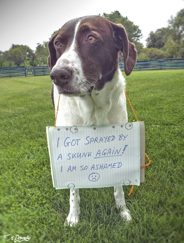 Guilty as Charged! Smiths Falls, Ontario Canada