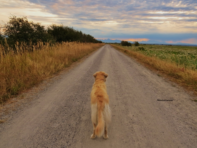 My Loyal Companion Shares A Path During Sunrise Delta, British Columbia Canada