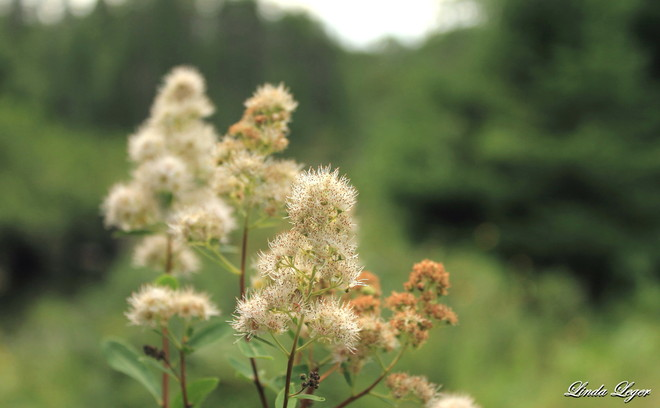 Fuzzy Flowers Ingolf, Ontario Canada