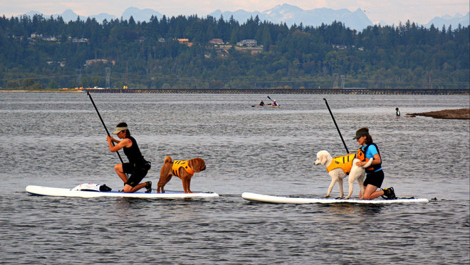 Dogs Day Afternoon White Rock, British Columbia Canada