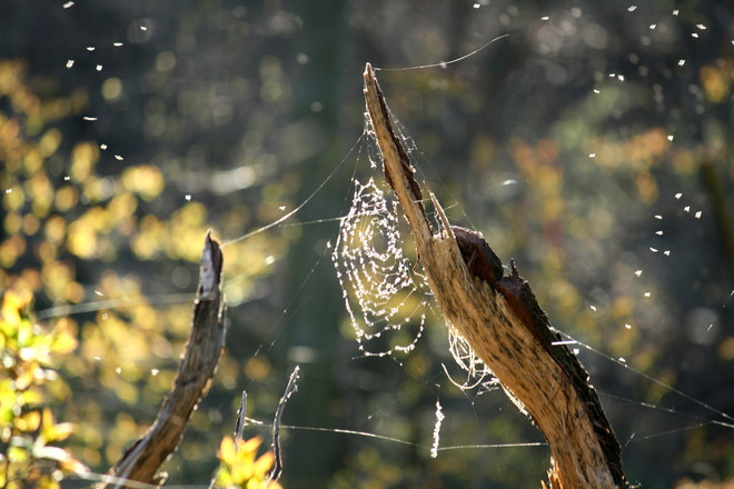 No hungry spider tonight Brighton, Ontario Canada