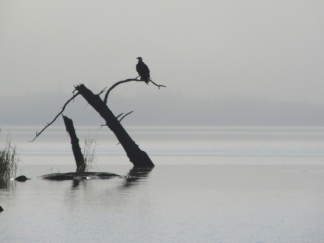 Eagle in the Mist Sioux Lookout, Ontario Canada