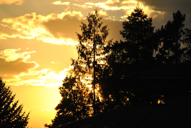 Sunset through the pines South Kelowna, British Columbia Canada