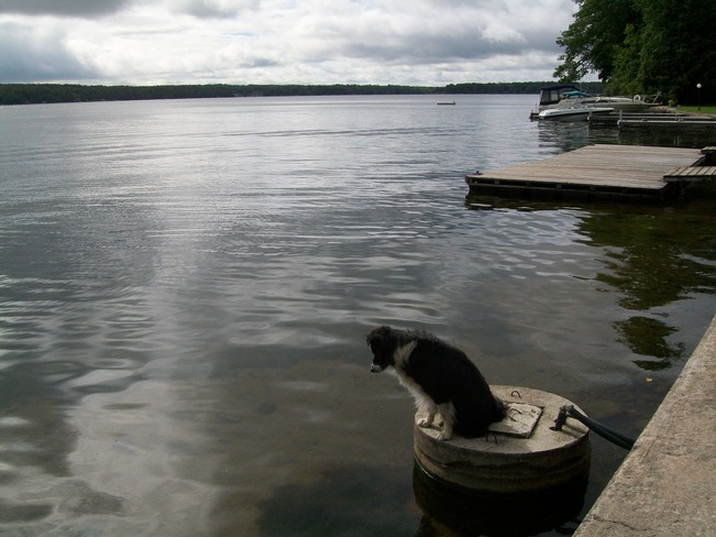 Dog Gone Fishing Buckhorn, Ontario Canada