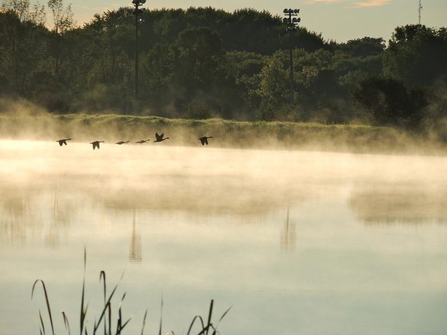 Misty Morning Takeoff Port Perry, Ontario Canada