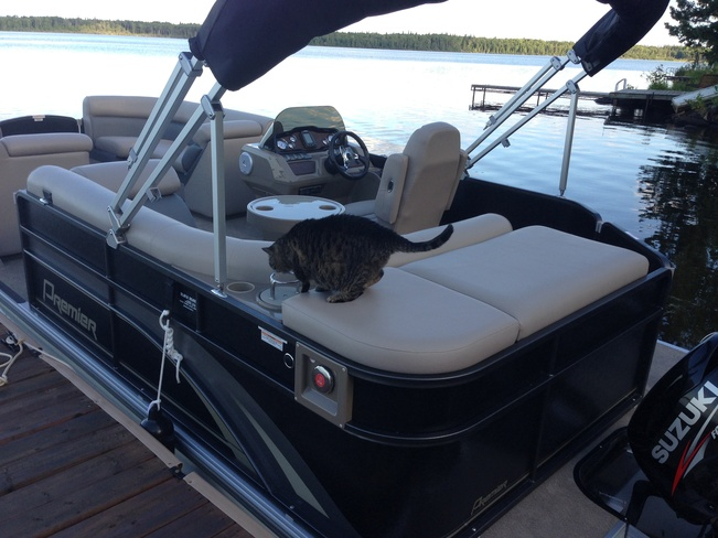 The cat that likes boating! Winnipeg, Manitoba Canada