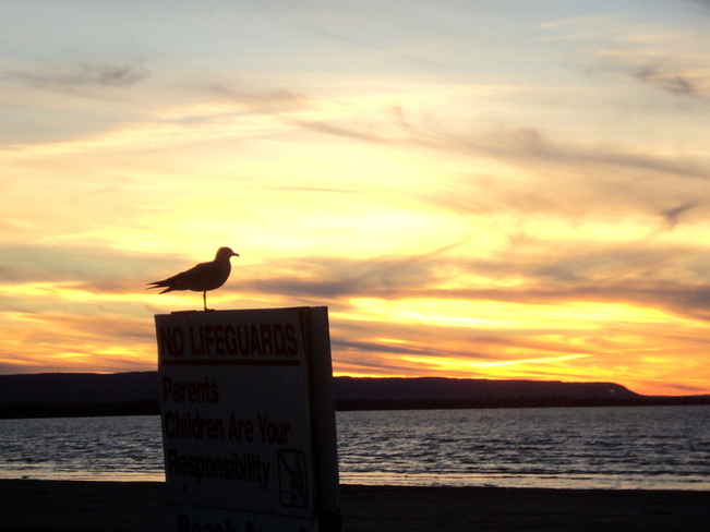 Seagull enjoying the sun setting Wasaga Beach, Ontario Canada