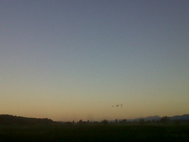 Field and Birds at sunset. Courtenay, British Columbia Canada