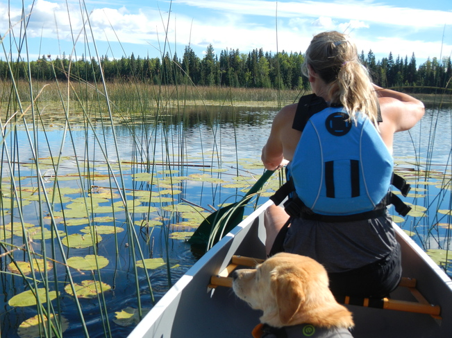 Paddling thru the Reeds Williams Lake, British Columbia Canada