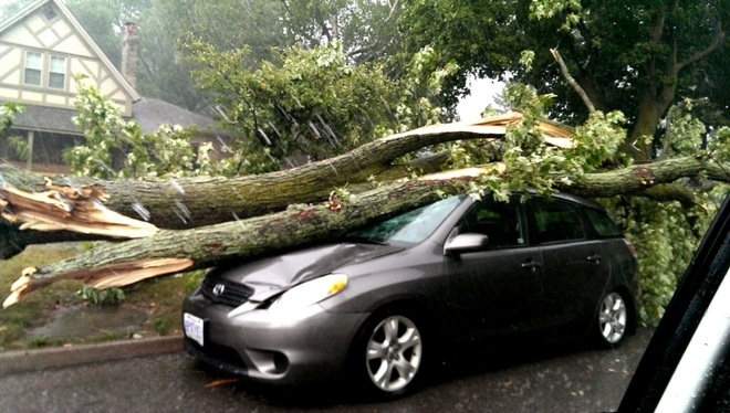 Storm takes down tree, crushes car London, Ontario Canada