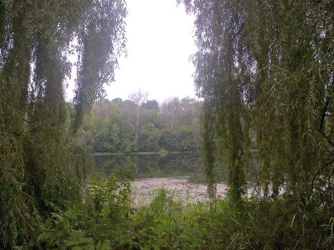 view from the willow tree Ottawa, Ontario Canada
