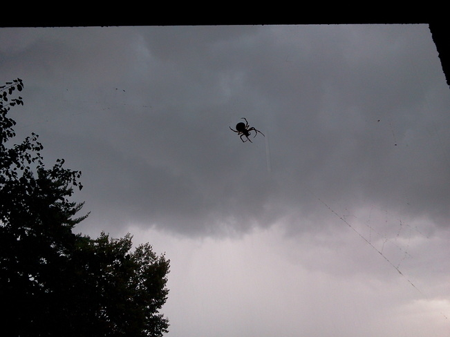 Spider hangs on during heavy rain Nepean, Ontario Canada