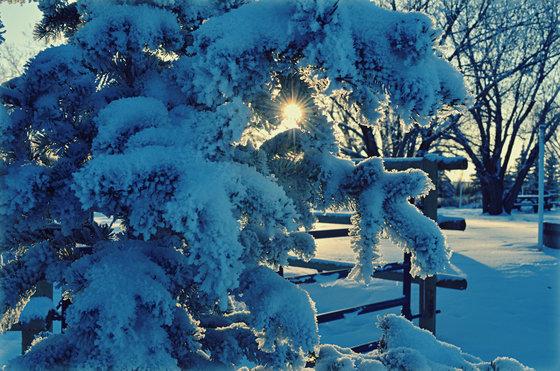 5c. Winter sun