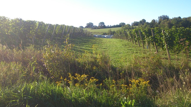 Grand Pre is a Grape Place to Be Wolfville, Nova Scotia Canada