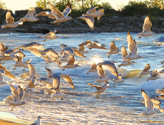 Gulls' beach party #2 Goderich, Ontario Canada