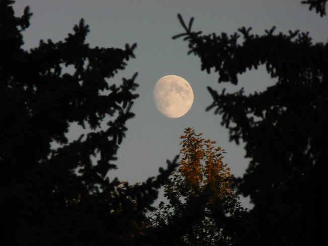 Moon with a little fall Calgary, Alberta Canada