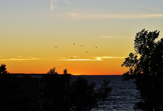 Clourful end to the day with a splash of gulls! North Bay, Ontario Canada