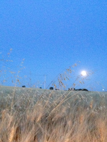 Harvest Moon shining on Beechy Beechy, Saskatchewan Canada