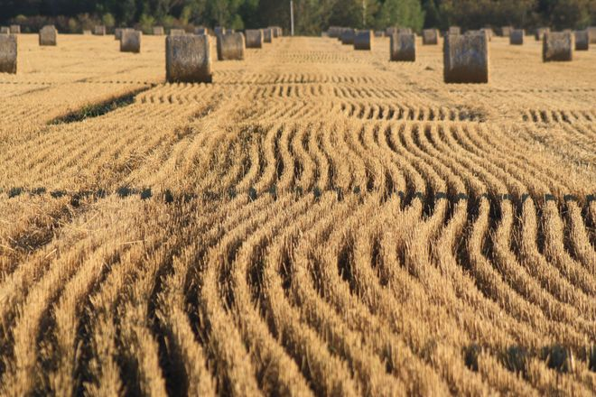Lots of Straw This Year Temiskaming Shores, Ontario Canada