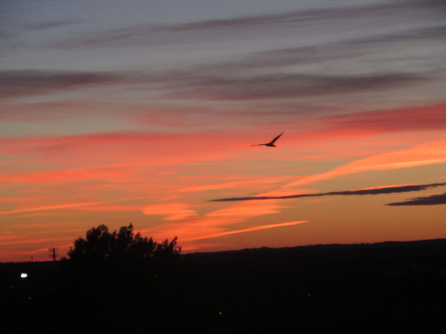 Last evening's Glorious sunset Moncton, New Brunswick Canada