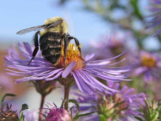 byzzy bee