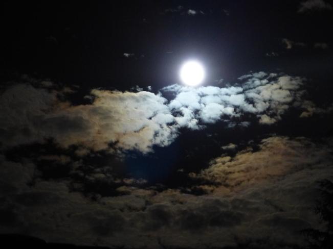Harvest moon Langley, British Columbia Canada