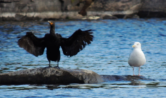 Show Off French River, Ontario Canada
