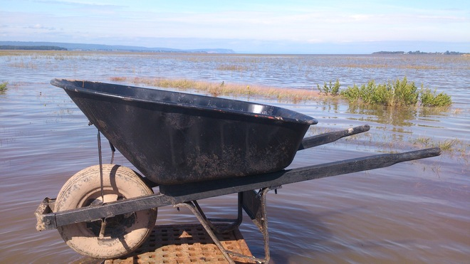 Had a Barrow of Fun on the High Tide in the Wolfville Harbour Wolfville, Nova Scotia Canada