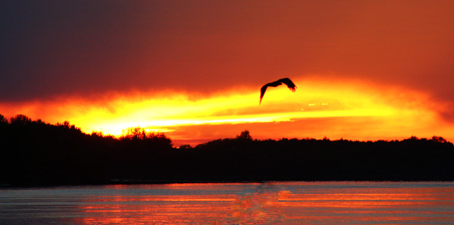 Sunset with an Eagle The Pas, Manitoba Canada