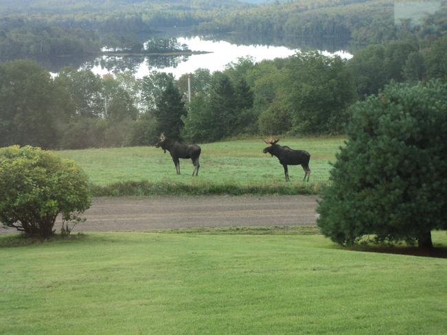 Very rare Goshen, Nova Scotia Canada