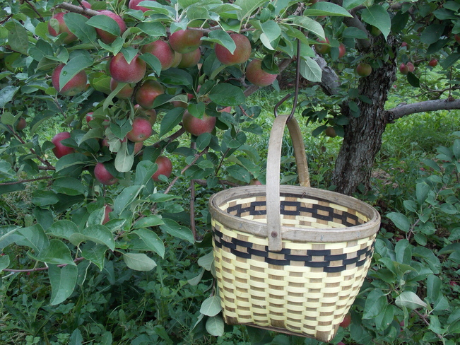 Great day for picking apples ! Hebbville, Nova Scotia Canada