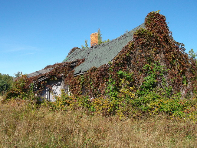 Old House Coverd In Fall Vines Massey, Ontario Canada