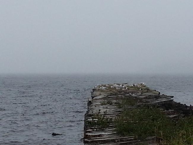 Sept 25 Hare Bay, Newfoundland and Labrador Canada