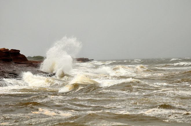 The wind is blowing in Cap-Pele. Cap-Pele, New Brunswick Canada