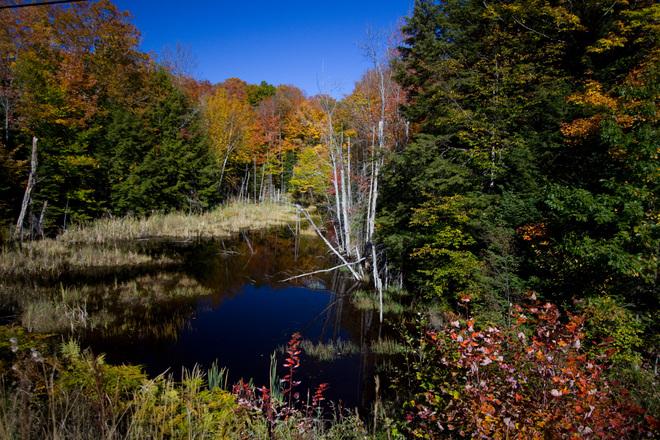 Fall Beauty By The Road Haliburton, Ontario Canada