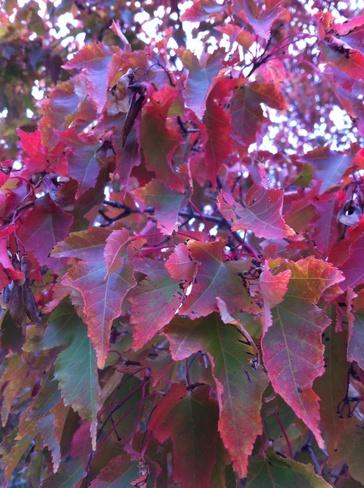 fall colors Edmonton, Alberta Canada