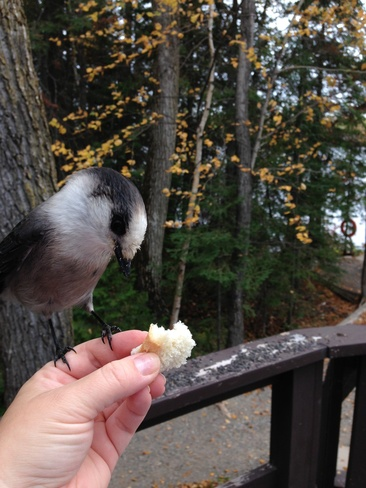 lunch time Timmins, Ontario Canada