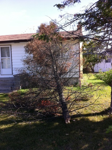 tree hit a house Lac du Bonnet, Manitoba Canada