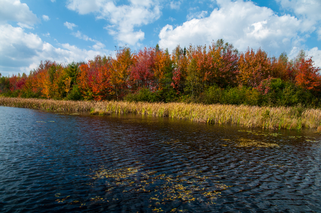 Fall Colours at the Foresrty Fredericton, New Brunswick Canada