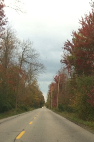 fall colours on Crowsfoot Rd Ariss, Ontario Canada